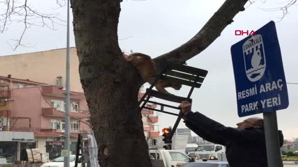 Çanakkale Ağaçta Mahsur Kalan Kedi, Sandalye Uzatılarak Kurtarıldı