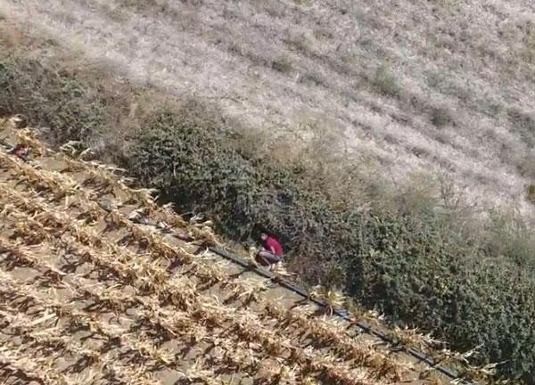 Cezaevi Firarisi, Drone İle Yeri Belirlenip Yakalandı