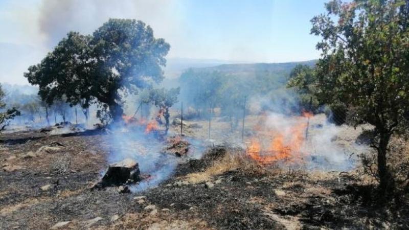 Ayvacık'ta Zirai Alanda Yangın Çıktı