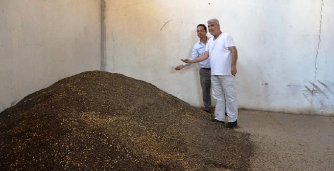 Biga'da ayçiçeği alımı başladı