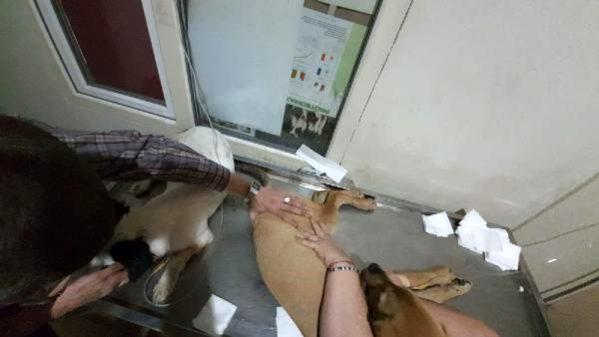 Biga'da Çok Sayıda Köpek Zehirlenerek Öldürüldü
