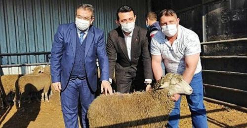 Biga'da Genç Çiftçilere Damızlık Koyun Dağıtıldı