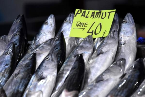 Çanakkale Boğazı'nda Yakalanan İlk Palamutlar Tanesi 40 Liradan Satılıyor