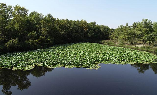 Nilüfer Gölü Güzelliği İle İlgi Görüyor