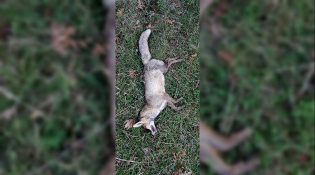 'Çan'da Hayvanlar Zehirlendi' İddiası