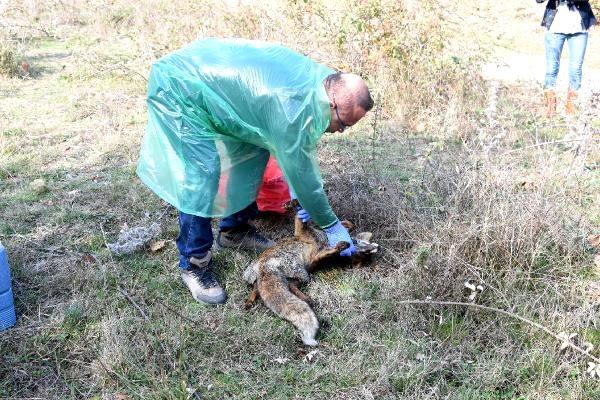 Çan'da Ölü Bulunan Hayvanlarla İlgili İnceleme ve Soruşturma