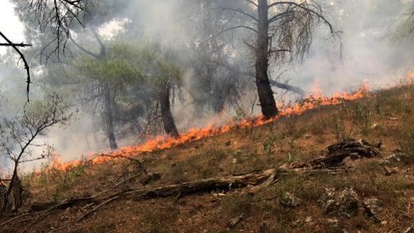 Ezine'de Ormanlık Alanda Yangın; 1 Hektar Yandı