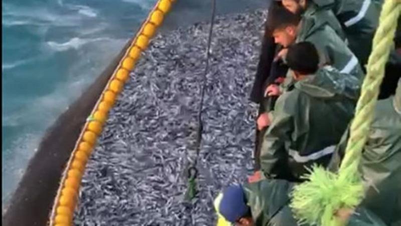 Gırgır Teknesiyle, Tek seferde 30 Ton Sardalya Avladılar