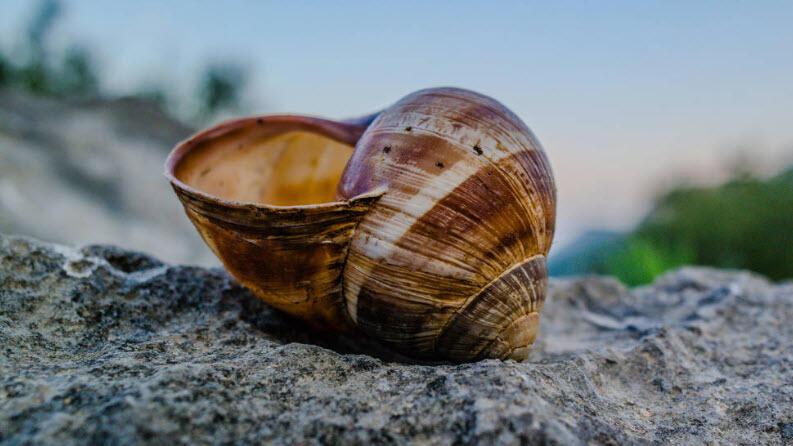 Gökçeada'nın Tatlı Sularında 4 Yeni Sucul Salyangoz Türü Keşfedildi
