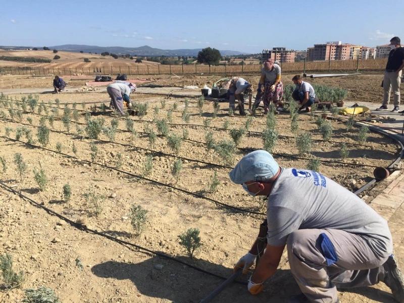 Kent Merkezinde Mis Kokulu Bir Bahçe: Aromatik ve Tıbbi Bitkiler Parkı