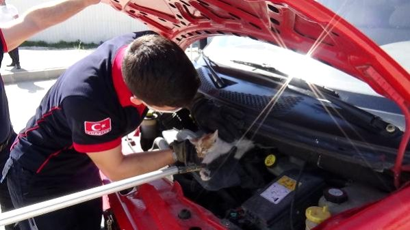 Otomobilin Motorundan Çıkarılan Kedi, İtfaiye Aracının Motoruna Girdi