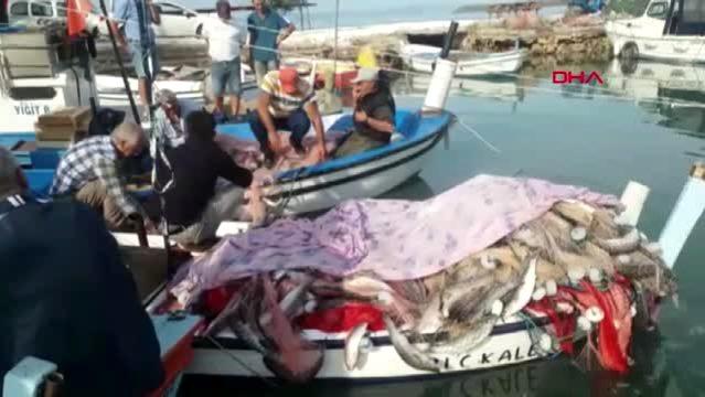 Saros Körfezi'nde 1,5 Ton Kefal Yakaladı