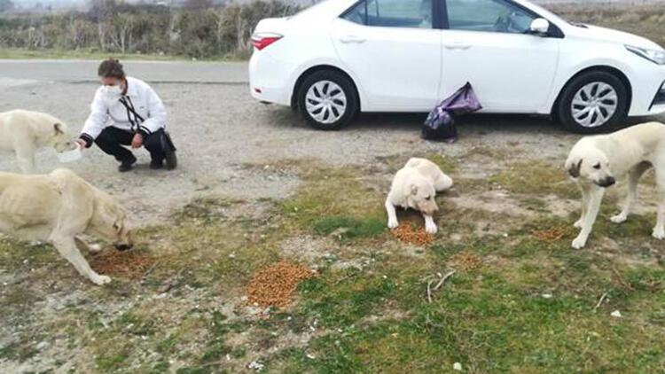 Sokak Köpeği ve 14 Yavrusuna Hayvanseverler Sahip Çıktı