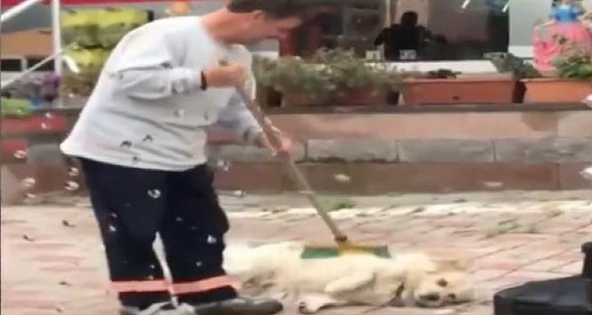 Temizlik İşçisine Süpürge İle Kendini Temizleten Köpek Görenleri Gülümsetti