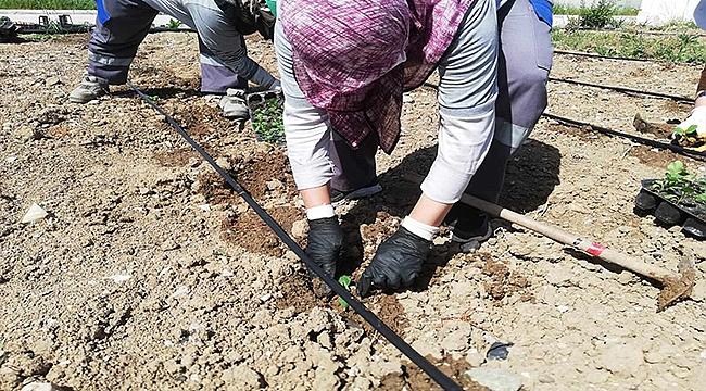 Topraklar Yeni Ürünlerle Bereketleniyor