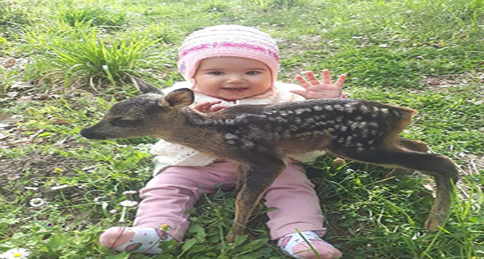 Yavru Karacayı Çoban Köpeklerinden Köylü Genç Kurtardı
