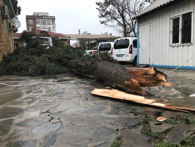 Ayvacık'ta Şiddetli Rüzgar Ağaç Devirdi