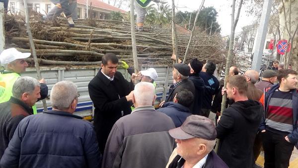 Bayramiç Belediyesi 3 Bin Ihlamur Fidanı Dağıttı