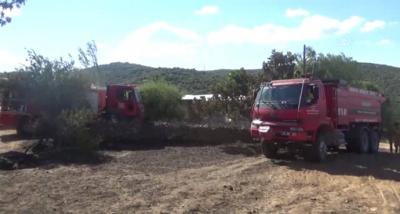 Arazi yangını ahıra sıçradı, 53 koyun telef oldu.