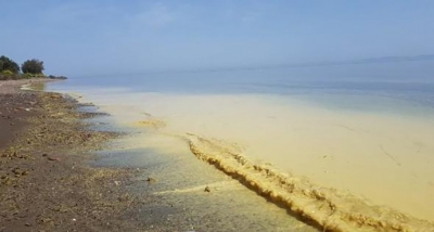 Assos Sahilindeki Ürküten Görüntü İçin Analiz Sonuçları Bekleniyor