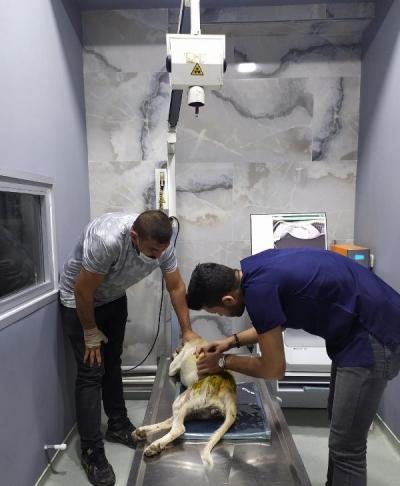Av Tüfeğiyle Vurulan Sokak köpeği İçin İstanbul'dan Çanakkale'ye Gitti