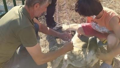 Ayvacık'ta Dereye Düşen Köpeği Belediye Personeli Kurtardı