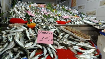 Balıkçılar ve Vatandaşlar Balık Sezonundan Umduğunu Bulamadı