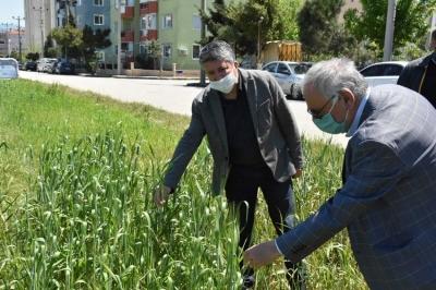 Başkan Gökhan, Karakılçık Buğday Alanlarını İnceledi