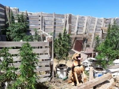 Biga'da Uyuşturucu Operasyonu: 1