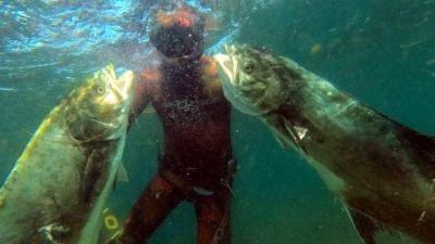 Bu Balıkları Zıpkınla Avladılar