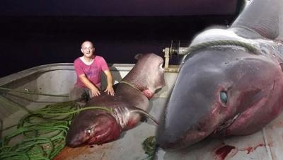 Çanakkale Balıkçı Ağına 1 Tonluk Köpek Balığı Takıldı