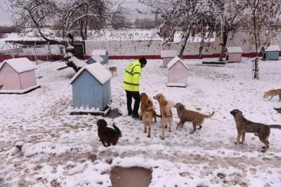 Çanakkale Belediyesi Soğuk Havada Can Dostlarını Unutmadı