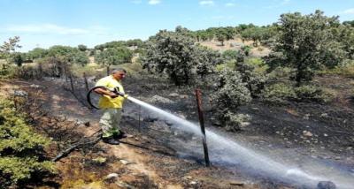Çanakkale'de, 6 dönüm makilik yandı