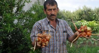 Çanakkale'de hasadı yapılan soğanlar görüntüsüyle şaşırttı