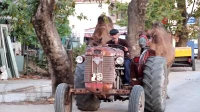 Develer Traktör İle Antrenman Yapıyor