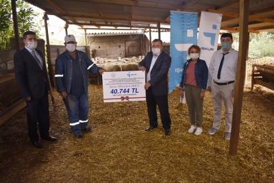 Hibe Desteği Bereketiyle Geldi, Engelli Çiftçi Koyun Üretimine Başladı!