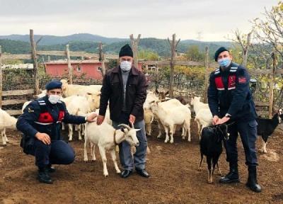 Jandarma, Kayıp Koyunları Dronla Buldu