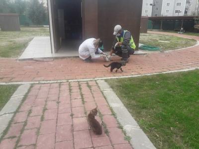 Kedi Köyünde Düzenli Sağlık Kontrolleri Gerçekleştiriliyor