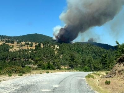 Yenice'de Orman Yangını
